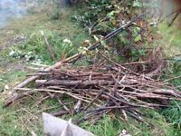 Large branches and kindling