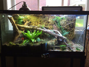 vivarium 90 gallon