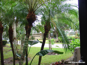 Fort Myers IslandPark Villa