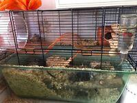 Gerbilarium with 3 friendly female gerbils