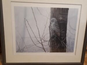John Porterly Limited Edition 'Silence' Grey Owl Framed Print