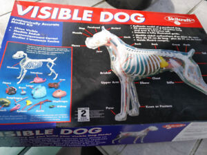 Visible dog model kit skilcraft study anatomy