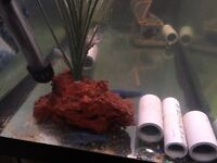 Lobster fish tank for sell