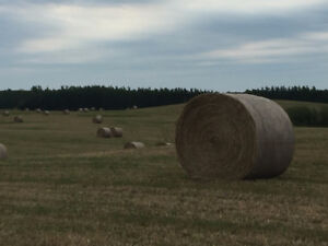 Round Timothy Hay Bales For Sale