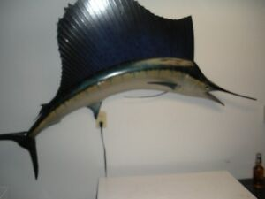 Giant WallMount Fish-Reduced