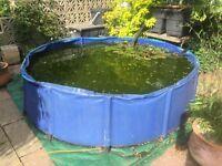 Koi VAT / Quarantine Tank