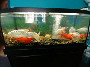 25 Red Fish, 1 Koy and 3 Aquariums for sale