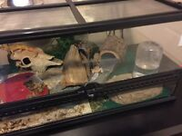 Two geckos ...tank and accessories