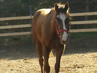 Project - 2 year old filly