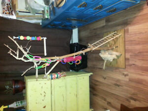 Bird jungle gym! Motivated seller!
