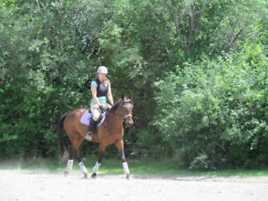 Mare for LEASE in Centreville area! Experienced rider ONLY!