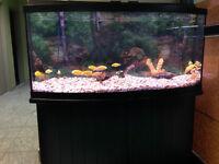72 Gallon Aquarium (FISH TANK / AQUARIUM POISSON)