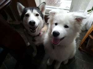 Dog walking, drop-in visits/play dates and boarding over night!