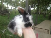 Rabbits For Sale - Pets or Pot - MUST GO!!