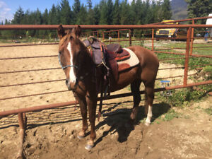 4 year old Reg paint mare