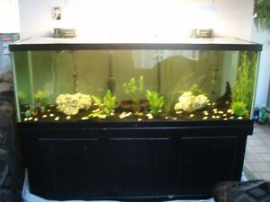 Fish/Reptile Tank 250 gallon with light and stand