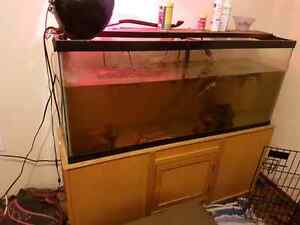 Turtles and tank for sale Strathcona County Edmonton Area image 2