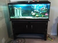 55 gal tank and stand, complete set up, filter heater etc