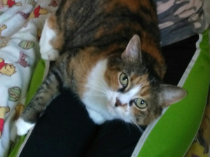 Cat Sitter: South Courtice