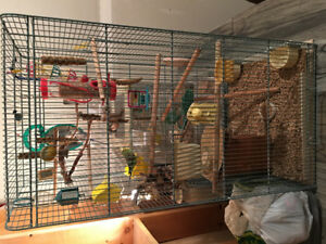 Urgent need of a  new home I have three buggies with 5 cage