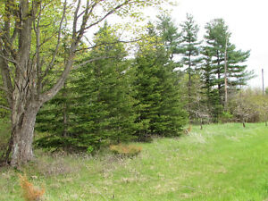 COUNTRY BUILDING LOT - HWY 35, Coboconk. $54,900.