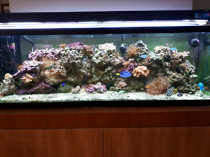 125 gallon aquarum for sale. Evetything u need for 1200