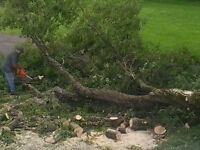 Need a tree or trees cut down?  I OFFER FREE estimates.