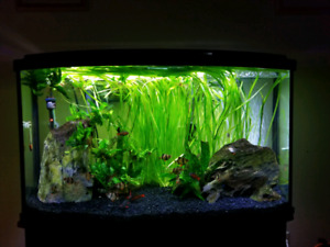 45 gallon bowfront fish aquarium