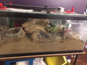 Urgent home needed for hermit crabs