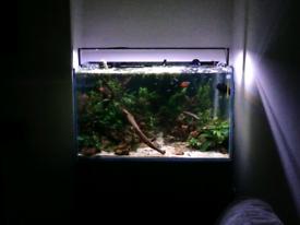 230L AquaOne Aquarium