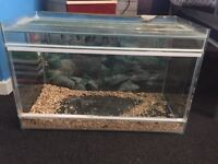 Reptile tank with sliding doors used for a bearded dragon
