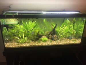 BEAUTIFUL 75G PLANTED & 9G PLANTED, + co2 and supplies