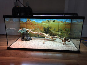 50 Gallon Terrarium with extra's