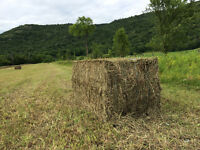 BIG SQUARE BALES FOR SALE 2015 first cut 50$ + transport