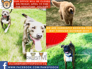 Pawsitive Pet Care - Celebrating 9 years in business!