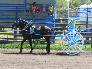 Heavy Horse Show Wagon, Cart and accessories. Moose Jaw Regina Area image 3