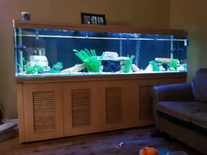 Aquarium jebo 265 gallon 8 pied