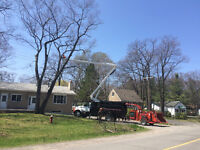 NEXT LEVEL TREE SERVICES INC. *tree removal and stump grinding