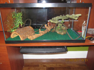 Terrarium and accesories for a Bearded Dragon