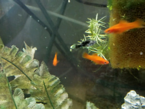 Aquarium fish snails shrimp plants live food and more