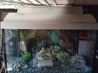 Full set up starter fish tank
