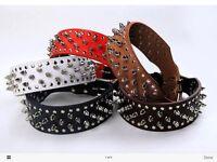 Joblot leather studded dog collars