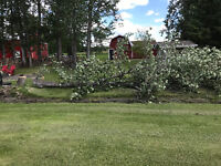 Tree and yard clean up / maintenance