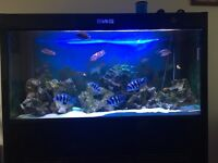 5ft cleair tropical fish tank