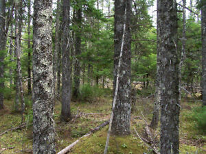 Land for Sale - Cape Breton, NS