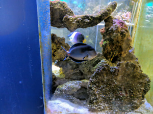 ****Salwater FISH for sale***