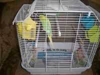 BUDGIEES