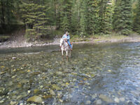 14 yr old appy trail / mountain horse