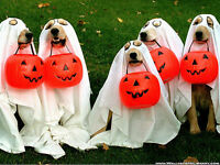 HoWL'OWEEN Event for Dogs at Taylor'ed Canines!