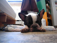 In-Home Dog Boarding - $35 per night